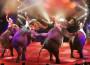 """Al Festival di Latina si parla di """"cultura del rispetto"""" verso gli artisti a quattro zampe"""
