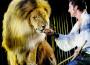 Il circo Krone sfida l'Austria