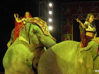 Censimento online sul circo in Europa: importante l'adesione di artisti e direttori italiani