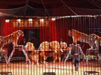 La Corte d'appello assolve il Circo Medrano