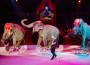 Festival di Bucarest: gli animali fra le Stelle del Circo