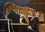 Divieti ai circhi con animali nel mondo? Favole… non si imprigiona la verità
