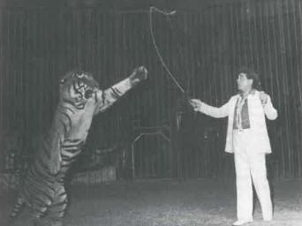 Roberto Bellucci: giorni e notti di circo
