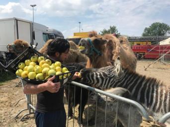 Il cuore grande di Coldiretti Rovigo tornata con altri aiuti per gli animali del circo