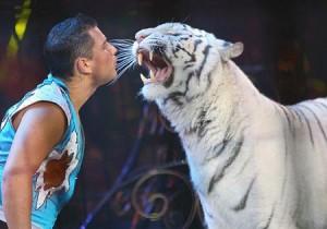numero-animali-circo
