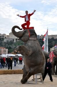 elefante-imperia