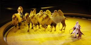 animali-circo