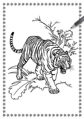 Sito del mensile circo ente nazionale for Immagini tigre da colorare