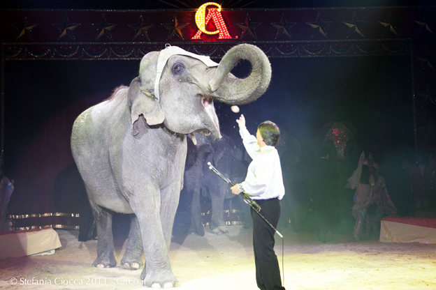 circo-americano-foto-ciocca