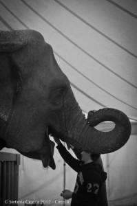 darix-togni-elefanti
