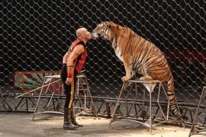 circo-tigre