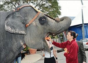 Stephanie di Monaco con i suoi amati elefanti