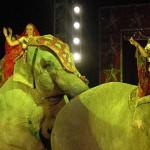 american-circus-elefanti