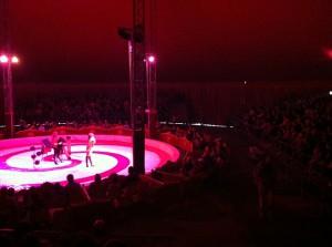 circo-millennium-belluno-interno