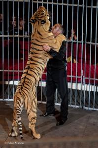 Giordano Caveagna con le sue tigri. Quando gli animalisti dimostreranno un briciolo del feeling e dell'amore fra ammaestratore e animale che è normalità al circo, allora potranno aprire bocca sul circo