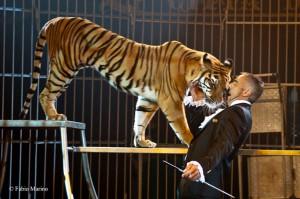 Giordano Caveagna. L'ammaestramento è solo il risultato di interazione, fiducia e amore per gli animali