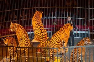 Giordano Caveagna con le tigri