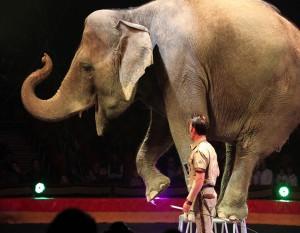 elefante-darix-martini