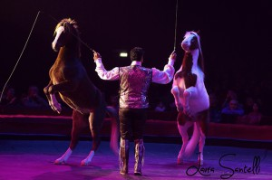 golden-circus4