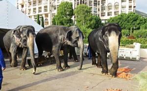 Elefanti a... colazione