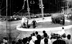 Lo spettacolo che i circhi organizzarono nello stadio di Ancona