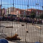 Il circo affascina Latina: enorme partecipazione di pubblico stamattina in piazza del Popolo