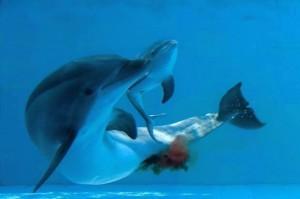 Un evento straordinario, la nascita di Lapo al delfinario di Rimini