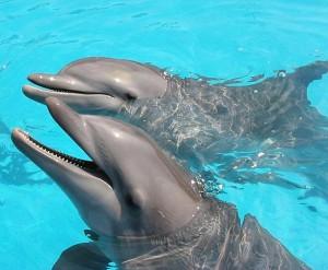 Sole e Luna, due dei delfini sottratti al delfinario di Rimini