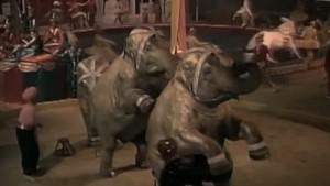 L'immagine che compare nel video Mediafriends a favore dell'associazione animalista di Michela Brambilla, un'altra forma di sostegno economico verso associazioni animaliste alle quali non mancano certo le risorse