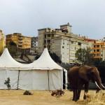 L'elefante Baby