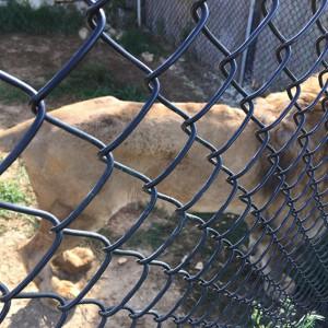 leone-semproniano2a
