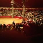 live-circus3