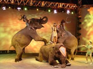 elefanti-errani