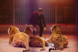 Le tigri di Flavio Togni mandate da Hans Ludwig Suppmeyer
