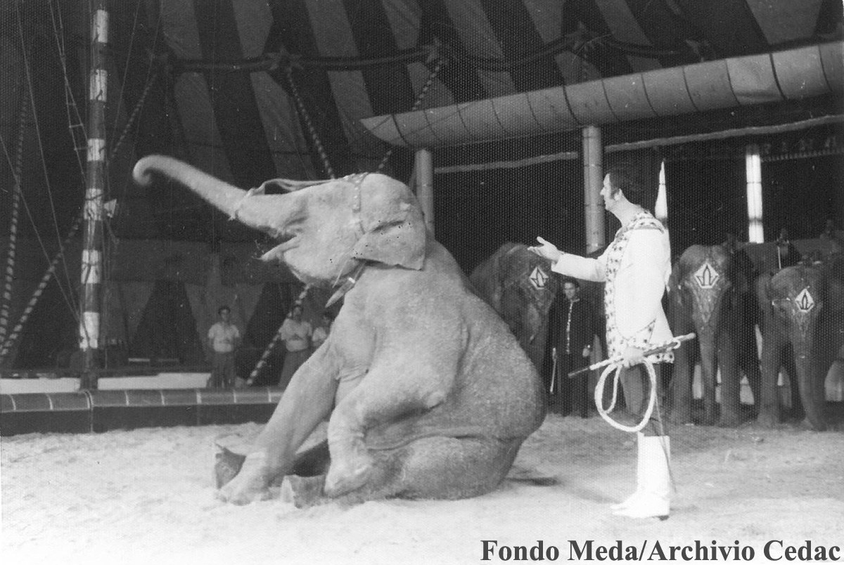rinaldo-orfei-elefanti